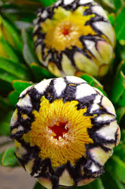 115 best interesting and unusual flowers plants images on
