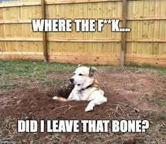 Confused Dog Meme - confused dog imgflip