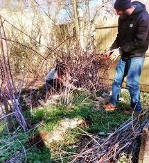 pruning u2013 philadelphia orchard project