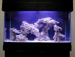 live rock aquascape designs live rock set up idea fish tank for