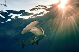 u s fish u0026 wildlife service international affairs