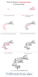 how to draw a freshwater shrimp