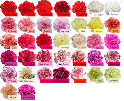 Carnations In Bulk Carnation U2014 Maui Wholesale Blooms Marian Players At Sps