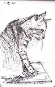 cat one drawing daily