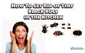 tiny brown bugs in my kitchen cabinets kitchen bugs how to get rid of tiny black bugs in the kitchen
