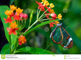 butterfly sitting on a flower in spring stock photography image