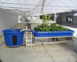 hydroponic gardens with fish home outdoor decoration