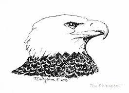 bald eagle sketch the forester artist