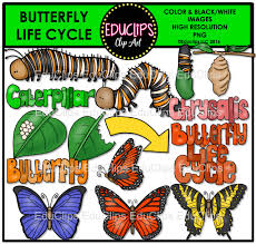 butterfly life cycle clip art bundle color and b u0026w welcome to