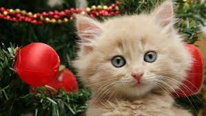 cat christmas 5 ways to cat proof your christmas tree mnn nature network