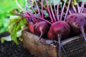 comment cuisiner la betterave crue betterave quoi faire avec et comment cuisiner ce légume