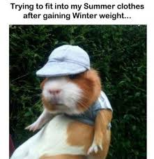 Gym Clothes Meme - trying to fit into my summer clothes animal