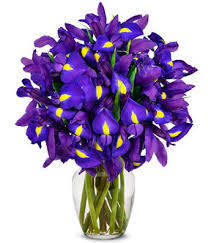 Free Vase Amazon Com From You Flowers Stunning Blue Iris 15 Stems
