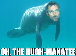 Manatee Meme - oh the hugh manatee by niki uk on deviantart