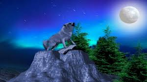 wolf howling at the moon wallpapers 41