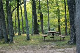 Park Bench Scene Free Images Landscape Tree Nature Grass Outdoor Wilderness