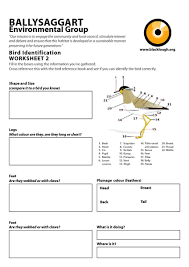 bird beaks and feet worksheet the best and most comprehensive