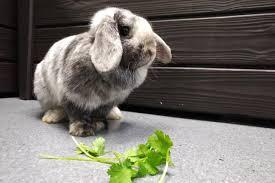 bunnies hamsters u0026 critters humane society