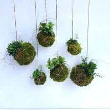 artificial kokedama string garden lucky plant and money plant