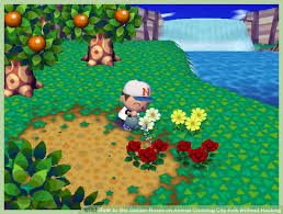Golden Roses How To Get Golden Roses On Animal Crossing City Folk Without Hacking