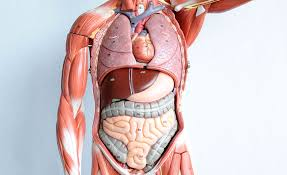 Essentials Of Human Anatomy And Physiology Book Online Online Anatomy And Physiology Book Courses Anatomy And Physiology