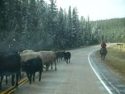 Wyoming travels images 390 best boomer travel wyoming images wyoming jpg
