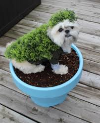 diy halloween costumes for dogs chia pet