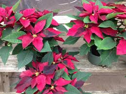 the plant you can u0027t identify could be the one that u0027s poisonous to