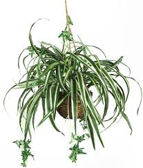 amazon com nearly natural 6607 spider hanging basket decorative