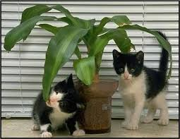 houseplants that are poisonous for your pet felines
