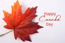 maple tree symbolism happy canada day maple leaf stock image image of country macro