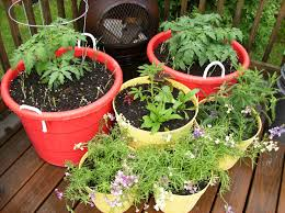 Potted Garden Ideas Garden Pots Ideas Dunneiv Org