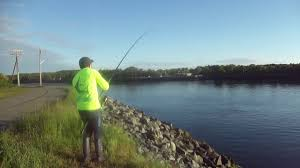 cape cod canal fishing 2017 youtube
