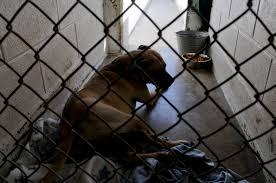 karing kennels advises pet ownership preparedness u003e kadena air
