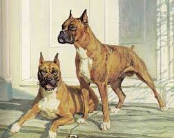 boxer dog art boxer picture etsy