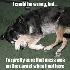 Carpet Cleaning Meme - cleaning humor carpet cleaning professional