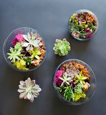 how to care for your succulents and keep them alive kabloom