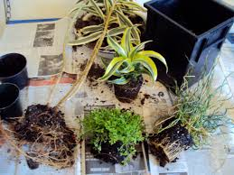 How To Make A Gift Basket How To Make A Plant Gift Basket Good To Grow