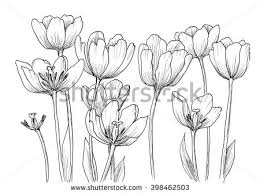 royalty free hand drawn decorative tulips isolated u2026 398462521