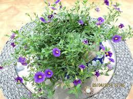 Identify Flowers - 25 best flowers images on pinterest flowers flower gardening