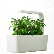 indoor herbs to grow amazon com click u0026 grow indoor smart fresh herb garden kit with