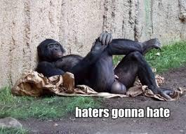 Funny Gorilla Meme - haters gonna hate gorilla viral viral videos