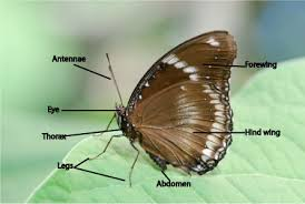 butterfly science for growing with science