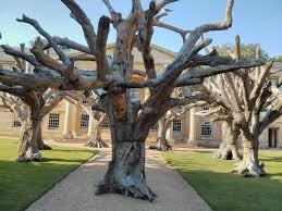 hase girish venkata nivarti steel trees