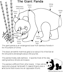 panda printout detailed labeled enchantedlearning