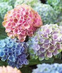 26 best flowers for the garden images on pinterest garden plants