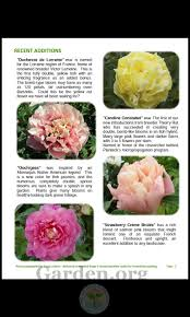 plants native to france peonies forum is there any interest out there for a group buy of