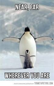 Cute Penguin Meme - penguin titanic the meta picture