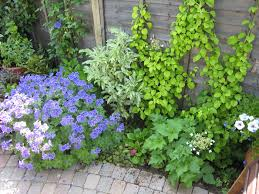 Small Garden Border Ideas Christine Lees Garden Design A Garden In Bedfordshire
