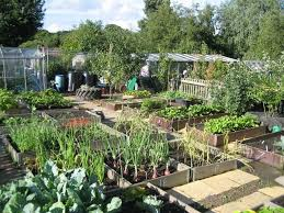 Garden Allotment Ideas Hertford Avenue Allotment Living In East Sheen Garden Ideas